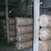 Грибные блоки вешенки, готовые к инкубационной, готовы к плодоношению, от производителя, опт фотография