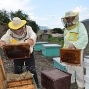 Пчелиный подмор (из горных пасек) фото