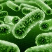Пробиотики и препараты для регуляции пищеварения. фото