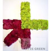 Экологотипы из мха от Artis Green фото