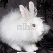 Кролики по выгодной цене фото