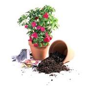 Услуги специалиста по уходу за растениями фото