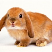 Премикс Аминовитан Н для кроликов фото