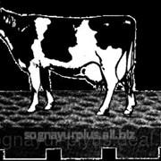 Маты для коров: Естественный комфорт фото