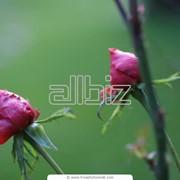 Декоративные растения фото