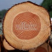 Закупка круглого леса фото