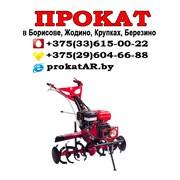 Аренда Прокат культиватора Борисов Жодино Смолевич фото
