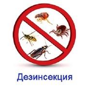 Уничтожения насекомых Дезинсекция фото