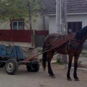 Средства гужевые транспортные под заказ купить Украина фото