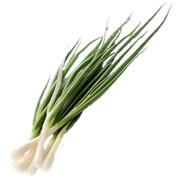 Лук перо свежая зелень фото