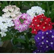 Семена цветов почтой фото