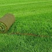 Устройство рулонного газона фото