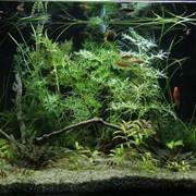 Установка аквариума фото