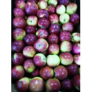 Яблоки Спартан калибр 5+ фото