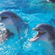Дубайский дельфинарий фото