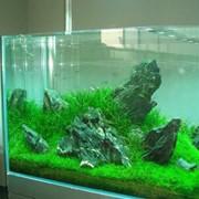 Изготовление аквариумов, аквариум поз заказ, купить, заказать, оптом, Винница, Украина фото