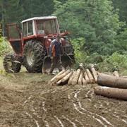 Трелёвка леса. фото