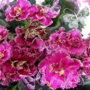 Цветущие комнатные растения в ассортименте к 8 марта фото