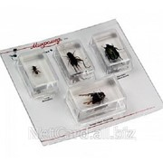 Набор насекомых 2, Экспонаты в акриле фото