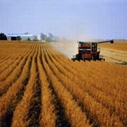 Крестянское фермерское хозяйство фото