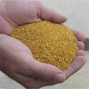 Послеспиртовая барда сухая кукурузная (DDG) фото