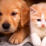 Страхование домашних животных «Котик&Песик» фото