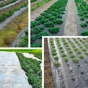 Спанбонд-Агроволокно для Сельского Хозяйства фото