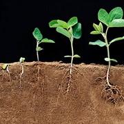 Регулятор роста растений Карамба Турбо фото