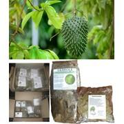 Листья сухие чай Сметанное яблоко / Гуанабана (Guanábana) / Гравиола (Graviola) / Саусеп (Soursop) / Анонна (Annona) 50 г /100 г фото