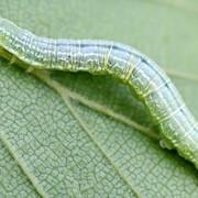 Защита сада от вредителей и болезней фото