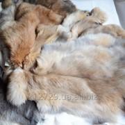 Шкура кроля-разные цвета фото