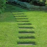 Стрижка газона газонокосилкой фото