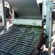Производственные линии консервированной кукурузы, Початкоочиститель кукурузы, машина для обрезки зерна с початков. фото