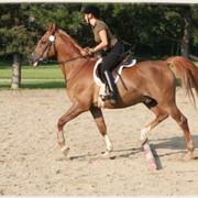 Услуги лошади с инструктором фото