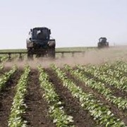 Опыление сельскохозяйственных культур. фото