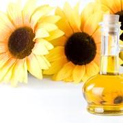 Производство масла из семян подсолнечника фото