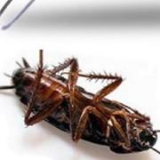 Служба по борьбе с тараканами и насекомыми. Николаев фотография