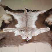 Ковры из шкур животных фото