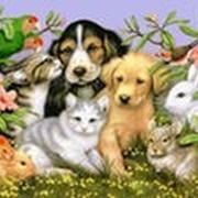 Передержка животных фото