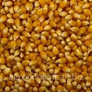 Кукуруза мел 272 фото
