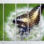 Модульна картина на полотні Метелик на кульбабі код КМ100150(150)-027 фото