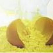 Сухой желтковый порошок. фото