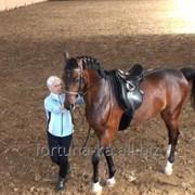 Трудоустройство в Польше Работа с лошадьми фото