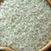 Заготовка, сушка, хранение семенного зерна фото