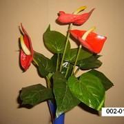 Антуриум горшечный мал. К5-505-10 002-011 фото