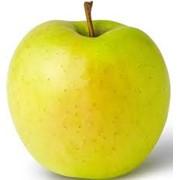 Яблоки сорт Гольден фото