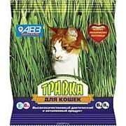 Травка для кошек (пакет) фото