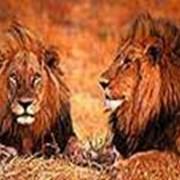 Сафари Африка фото