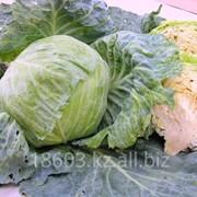 Семена капусты Славанова фото