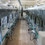 Установка доильная автоматизированная типа Тандем УДМ-Т фото